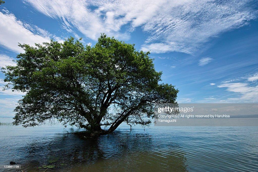 Tree in lake