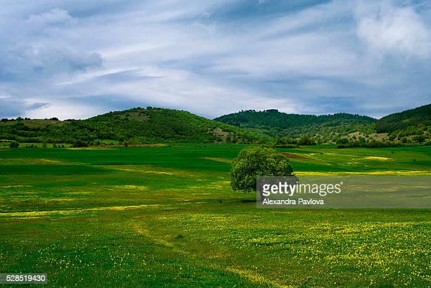 A tree in lush fields in the Rhodope Mountains, Bulgaria