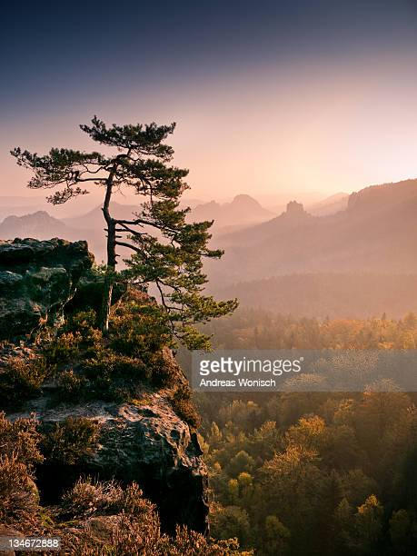 Tree in morning Llght in Saxon Switzerland