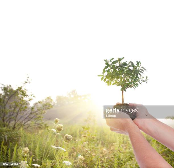 Tree in Palm of Hands
