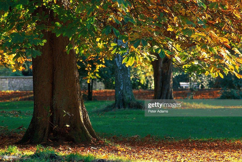 tree in park : Stock Photo