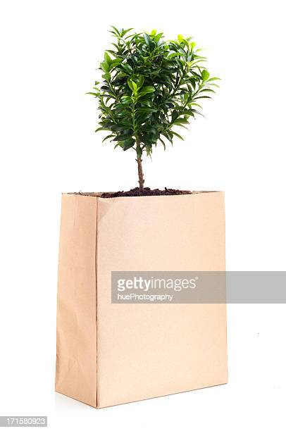 Arbre dans sac