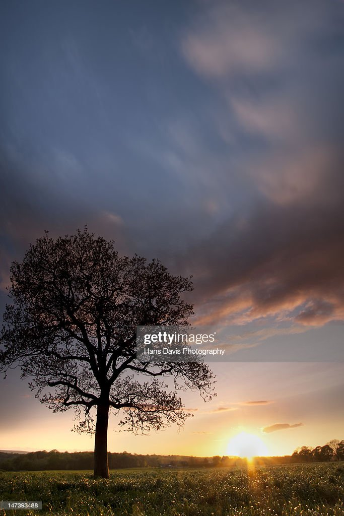 Tree in silhouette with sunset sky : Stock Photo