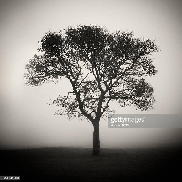 木は、ミスト