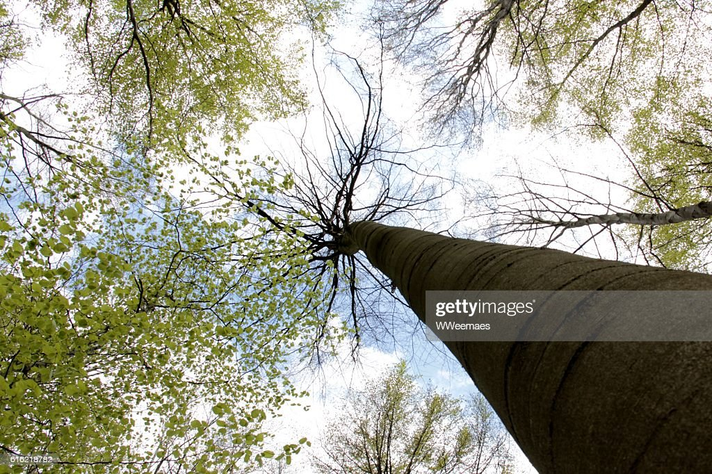 tree in the sky : Stock Photo