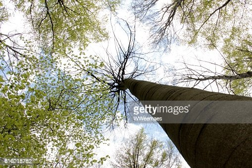 tree in the sky : Stock Photo