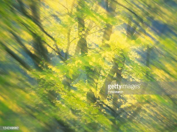 Tree in the Woods, Front View, Blurred Image