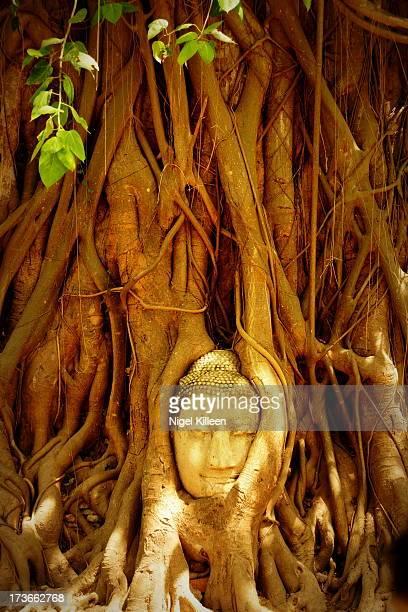 Tree intertwined