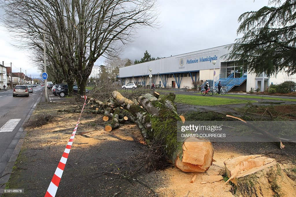 A tree is being cut down in downtown Brive-la-Gaillarde, southwestern France, on February 14, 2016 after falling overnight as a small tornado hit the town. About 15,000 homes were still without power Fabruary 14, including 3,000 in the Landes department and 3,000 in the Pyrenees-Atlantiques, after a storm raged through the southwest overnight. / AFP / DIARMID COURREGES