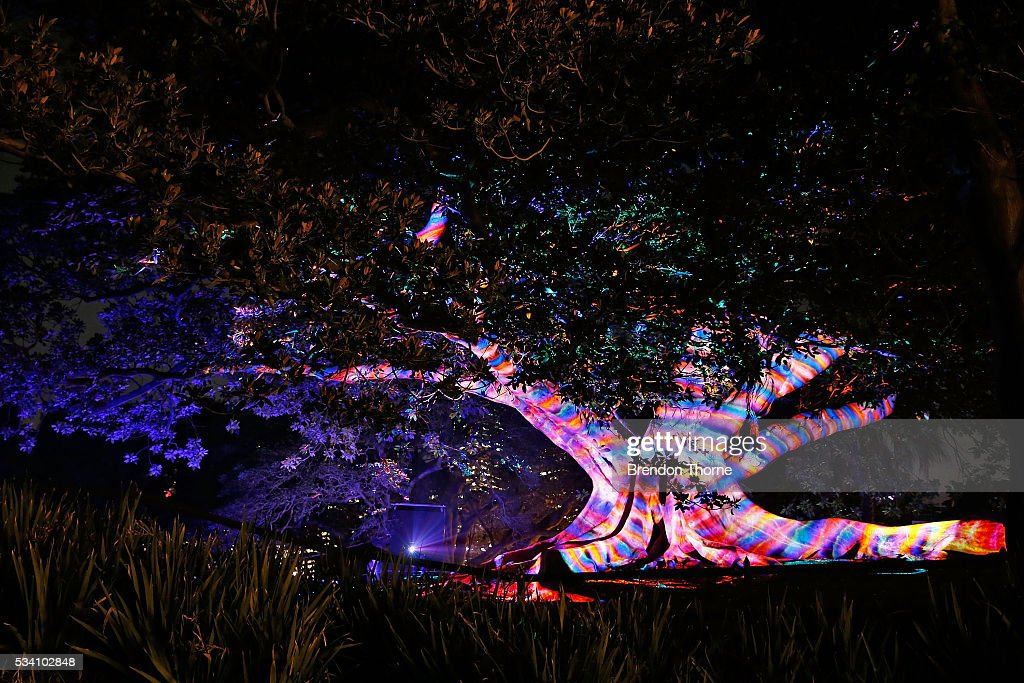 A tree is illuminated during the 'Garden of Light' display at The Royal Botanic Gardens on May 25, 2016 in Sydney, Australia. Held annually, Vivid Sydney is the world's largest festival of light, music and ideas.