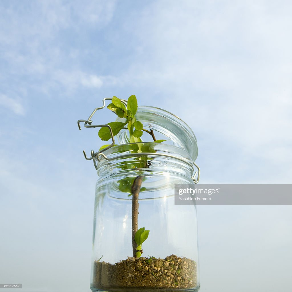 A tree is in a jar. : Stock Photo
