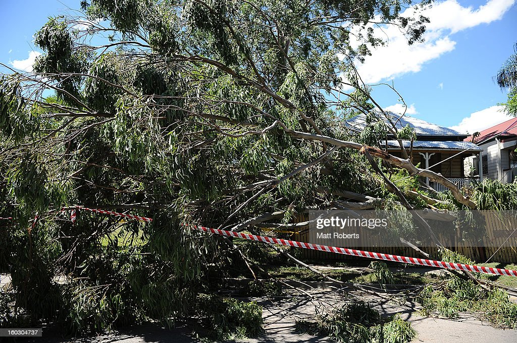 A tree is seen fallen in the front yard of a house in the suburb of Newmarket as parts of southern Queensland experiences record flooding in the wake of Tropical Cyclone Oswald on January 29, 2013 in Brisbane, Australia. The river in the Brisbane CBD is expected to peak at 2.3 metres today - lower than the 2.6 metre peak predicted - but is still likely to flood low-lying properties and businesses. The flood crisis has claimed four lives so far, with the city of Bundaberg, Queensland faces the worst flooding in it's history.