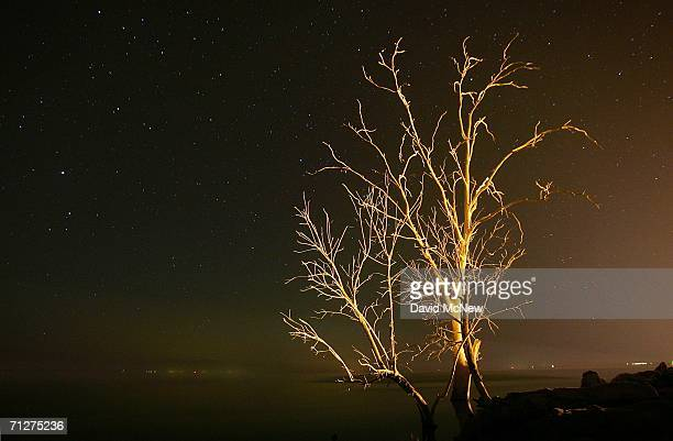 A tree killed by risen waters and whitened with the guano of birds that often crowd the branches during migration periods is illuminated by a nearby...
