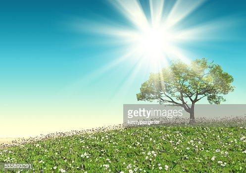 3D tree landscape : Bildbanksbilder