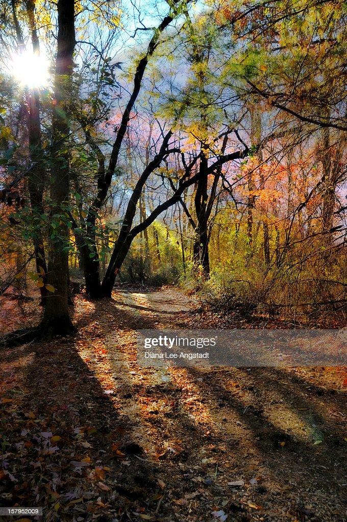 Tree Lights : Stock Photo