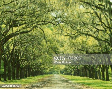 Tree line path