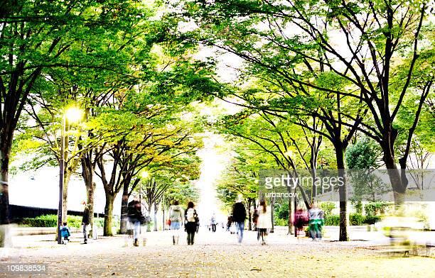 木々 avenue