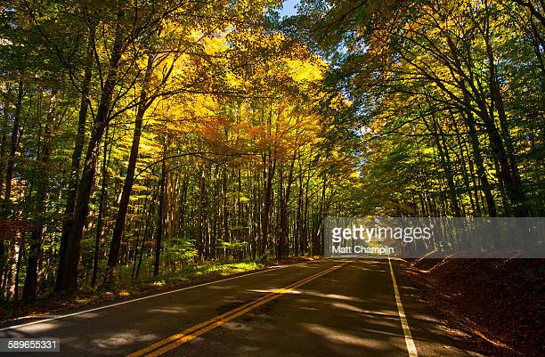 Tree lined country road in Autumn