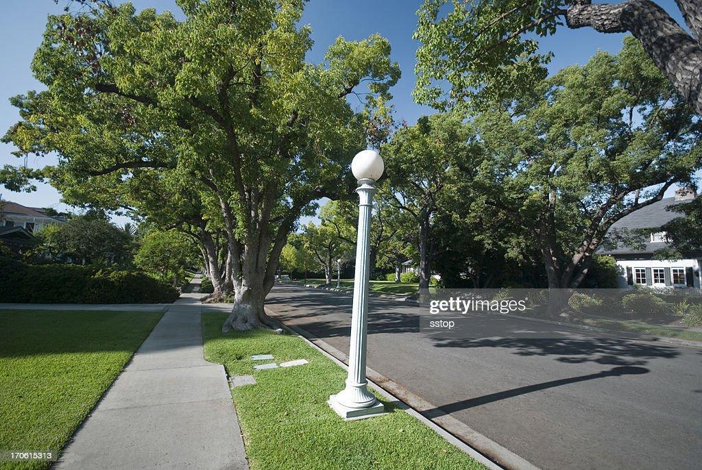 Tree Lined : Stock Photo