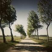 Tree lined road, Zeeland, The Netherlands