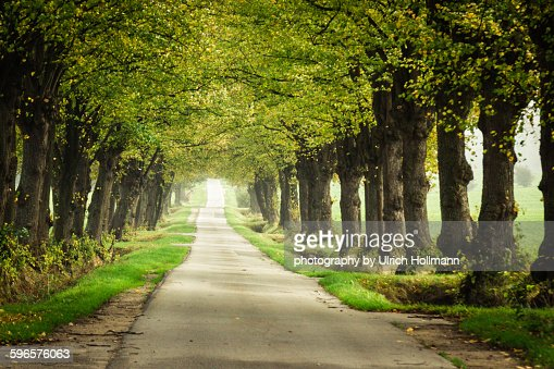 Tree lined street in Northern Germany