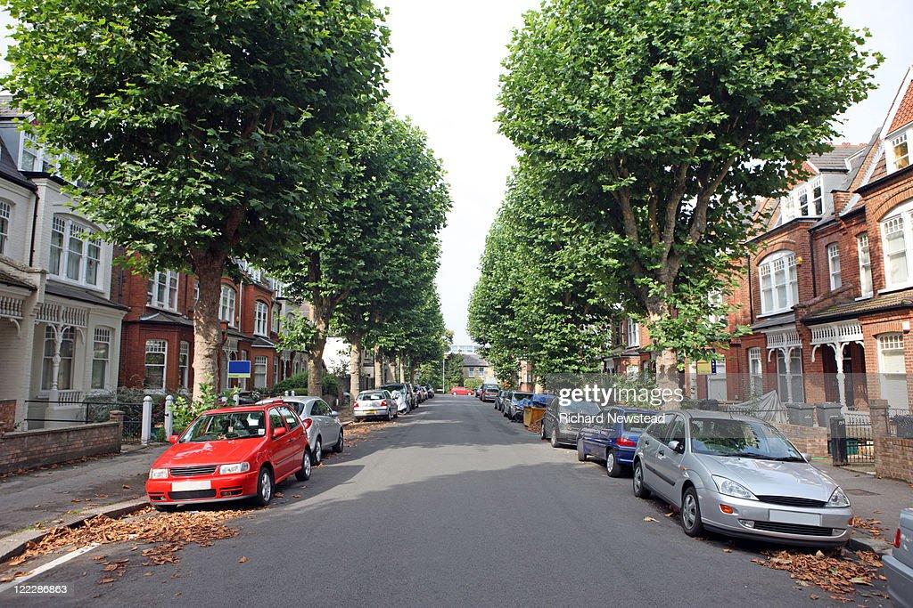 Tree lined street, UK : Stock Photo