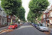Tree lined street, UK