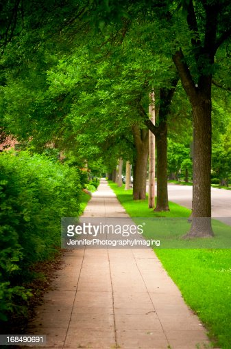 Tree Lined Urban Street and Sidewalk