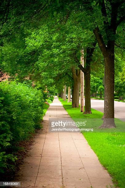 Die von Bäumen gesäumten Straßen und Gehwege Urban