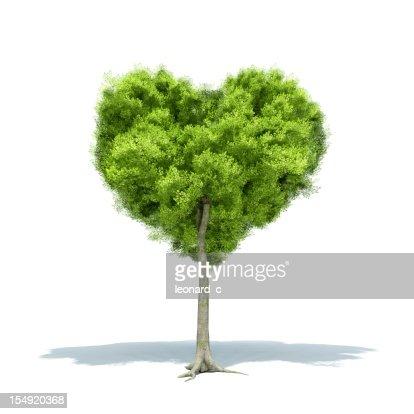 Tree Love : Stock Photo