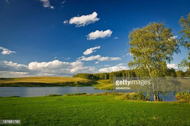 Tree near lake