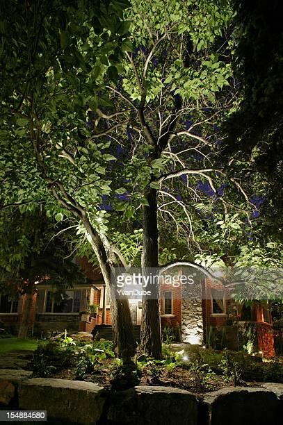 Baum Nacht-Szene