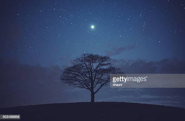 Baum von Jupiter