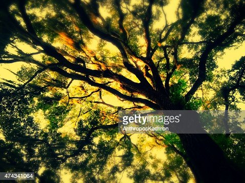 tree of life : Stock Photo