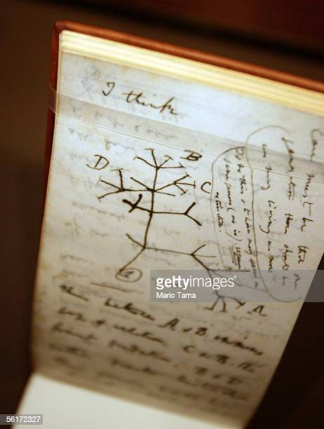 A 'Tree of Life' sketch is seen in Darwin's 'B' notebook at a press preview of the new 'Darwin' exhibition at the American Museum of Natural History...
