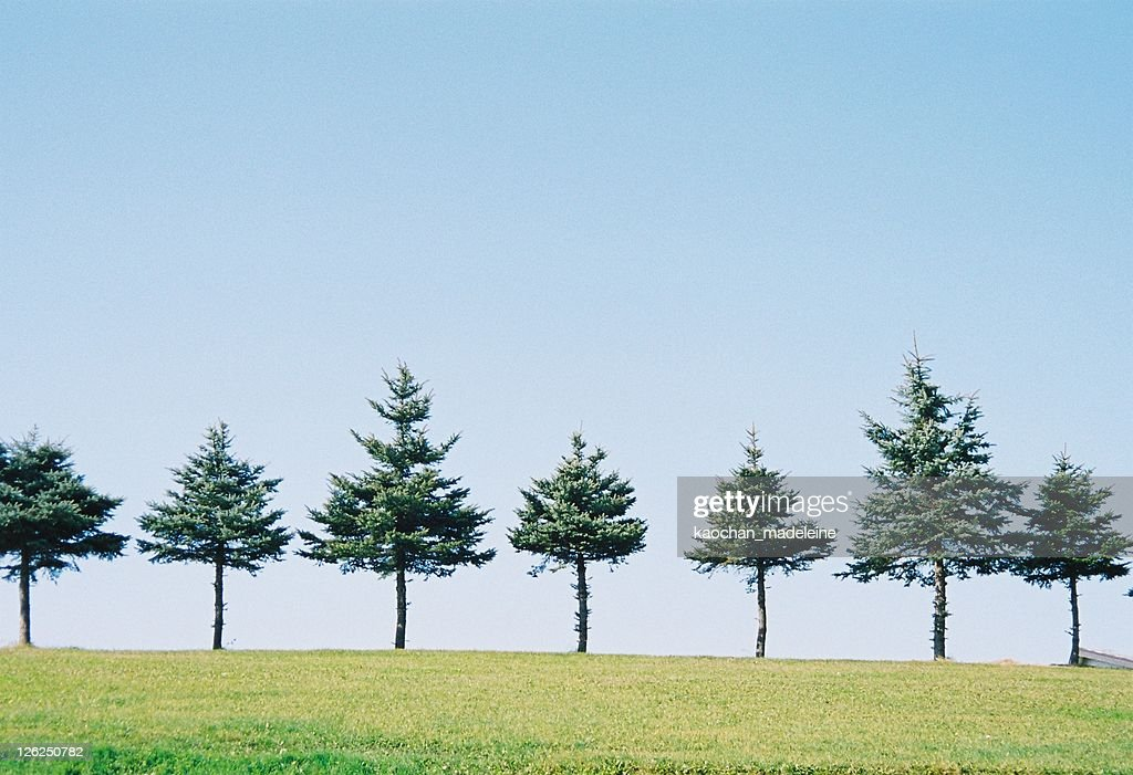Tree of paddy