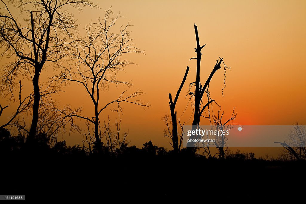 Tree of the evening. : Stock Photo