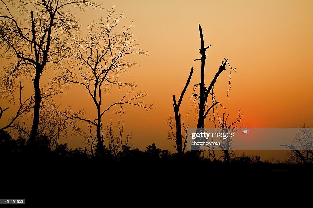 Árvore da noite. : Foto de stock