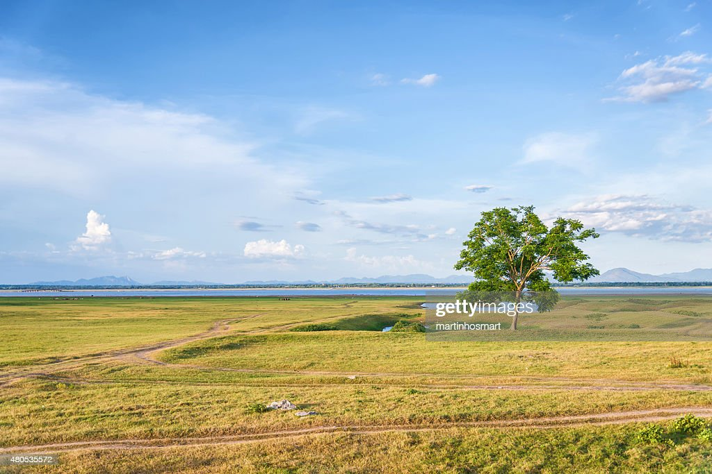 tree on a grass field in blue sky : Stock Photo