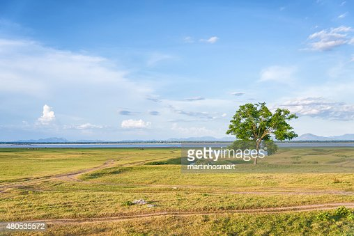 tree on a grass field in blue sky : Stockfoto