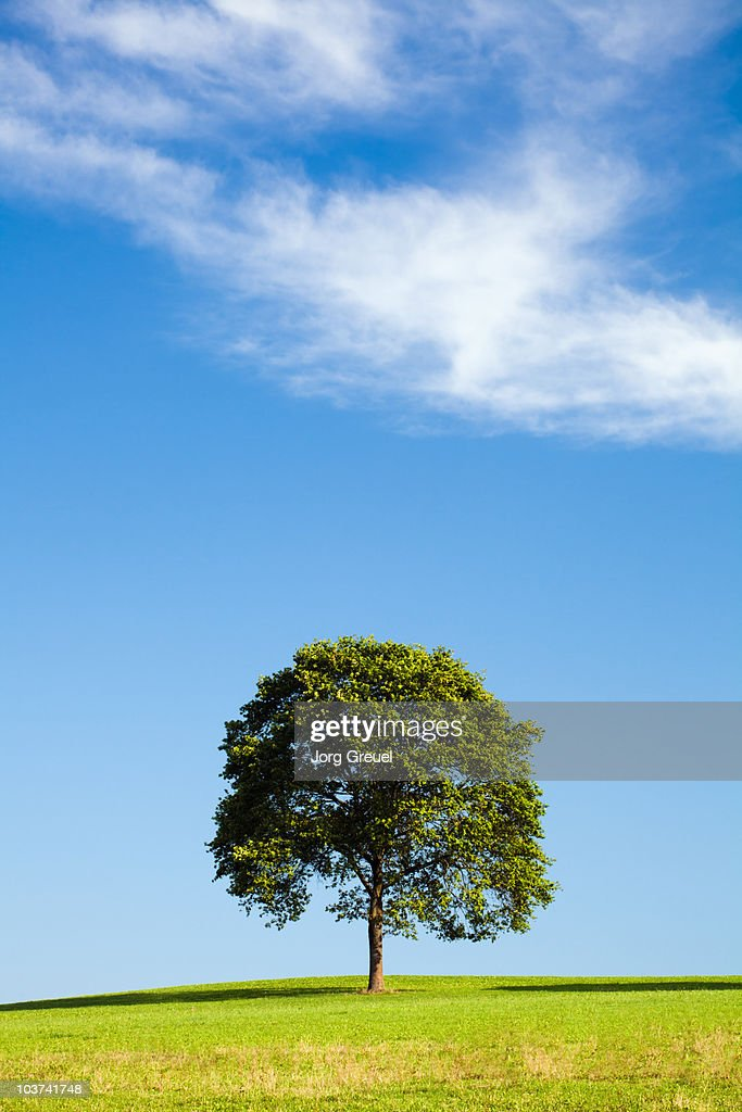 Tree on a meadow : Stock Photo