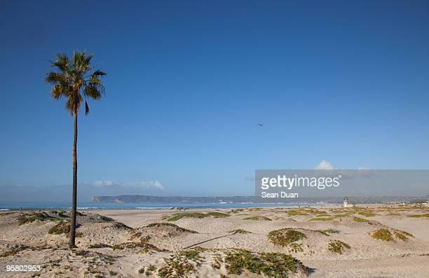 A Tree on Beach