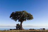 Tree on Chobe River