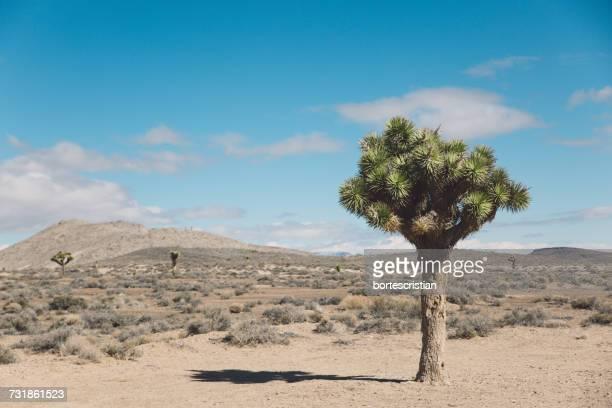 Tree On Desert Against Blue Sky