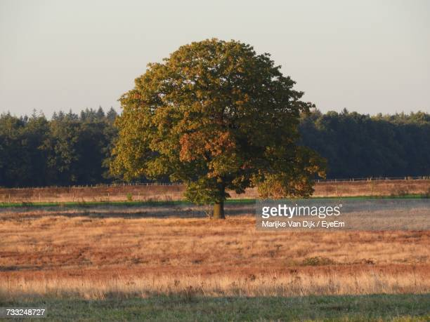 Tree On Field Against Clear Sky