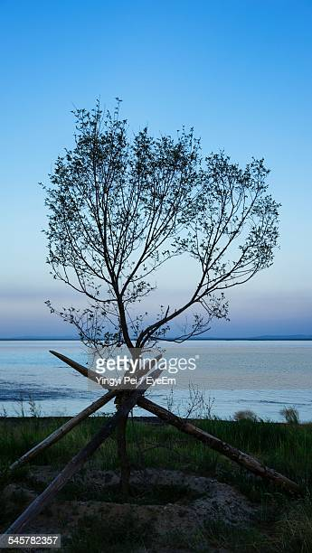Tree On Field Against Sea