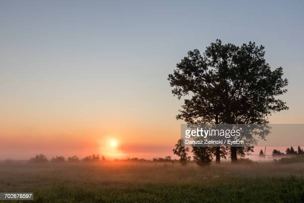 Tree On Grassy Field Against Sky During Sunset