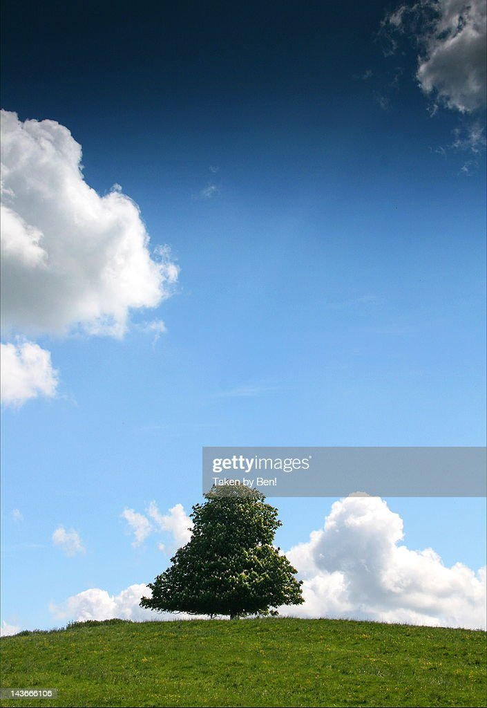 Tree on hill against sky : Stock Photo
