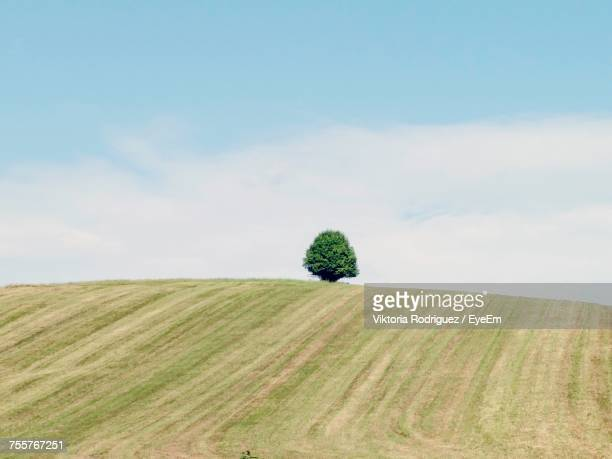 Tree On Hill Against Sky