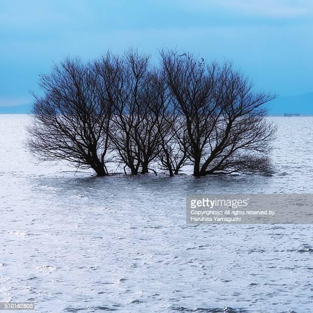 Tree on Lake Biwa (Happy New Year)